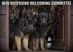 Wicked Training Your German Shepherd Dog Ideas. Mind Blowing Training Your German Shepherd Dog Ideas. Humor Animal, Funny Animal Memes, Dog Memes, Funny Animal Pictures, Funny Dogs, Funny Animals, Cute Animals, Dog Pictures, I Love Dogs