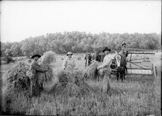 Havesting wheat at the O. E. Clark farm. Photographer: Gill, Charles Elliott. United States--Missouri -- Dent County. 1900-1910. Courtesy of the Missouri State Archives (USA).
