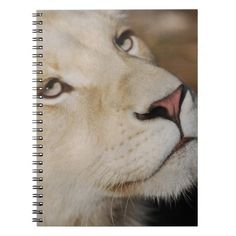 A gentle lion notebook Mountain Lion, Animal Kingdom, Lions, Notebook, Animals, Animales, Lion, Animaux, Animal