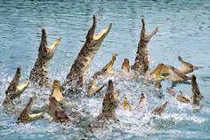 animals  in guangzhou - Google Search