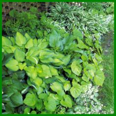Randbepflanzung in Grün, reizvoll und elegant Herbs, Elegant, Flower Beds, Farmhouse Garden, Planting, Planting Shrubs, Climber Plants, Evergreen Garden, Growing Flowers