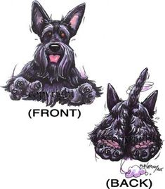 Scottish Terrier Coming and Going
