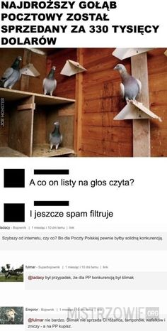 Wtf Funny, Hilarious, Polish Memes, Best Memes, Haha, Life Hacks, Funny Pictures, Jokes, Humor