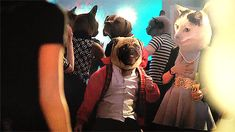 12 Pug Tips for a Stellar Halloween: Pick a costume you can dance in. #humor @BadgerMaps
