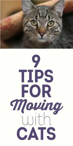 9 Tips For Moving With Cats