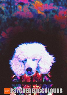 Diamond the Poodle Tulip Psychedelic Art by PsychedelicColours