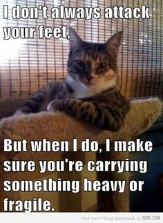I don't always attack your feet... but when I do, I sure you're carrying something heavy or fragile.