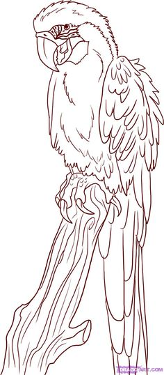 how-to-draw-a-parrot-step-6_1_000000005070_5.jpg 679×1,549 pixels
