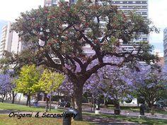 Jacarandáes,  Parque de España #Rosario #Argentina #BlogdeViajes #Travel elisaserendipity.blogspot.com