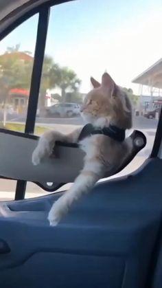 Funny Animal Memes, Funny Animal Videos, Cute Funny Animals, Cute Baby Animals, Funny Cats, Happy Animals, Animals And Pets, Cute Baby Cats, Cool Cats