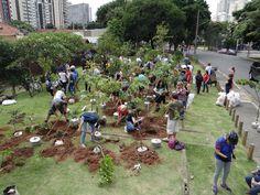 Publicitário cria projeto para plantar árvores por SP