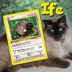 Artist Illustrates Pets Into Pokemon Cards And They Look Absolutely Adorable Pokemon Trading Card, Pokemon Cards, Custom Cards, Card Games, Cats Of Instagram, Cat Lovers, Pets, Illustration, Artist