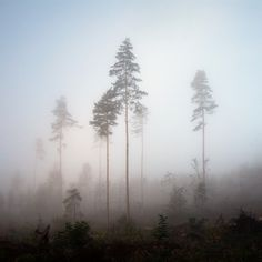 Norwegian Wood #3