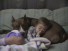 "Pitbulls scored above 121 other dogs in terms of temperament (yup, above Golden Retrievers!). Maybe this is why they used to be called ""nanny dogs"""