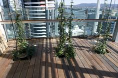 Indoor vertical landscaping at the Brisbane Supreme Courts | Ronstan Tensile Architecture