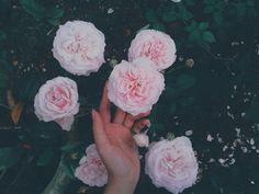 #rose !!!