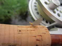 The Sulphur mayfly hatch is coming soon... can't wait!!