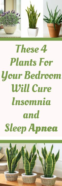 Unfortunately, numerous people nowadays suffer from sleep disturbances, night terrors, insomnia, or sleep apnea. Yet, there is a simple and natural way to improve your sleep and finally get some rest! All you need to do is to place one of the following plants into your bedroom and enjoy the calm and relaxing atmosphere: Snake…
