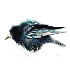 Bird watercolor Crow print. Nature or Bird Illustration, Crow, Raven ($36) ❤ liked on Polyvore featuring home, home decor, wall art, birds, accessories, misc, watercolor wall art, water colour painting, bird paintings and watercolour painting
