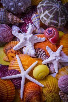 Three Photograph - Three Starfish by Garry Gay