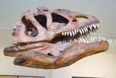 Museo de los dinosaurios, Sala de los Infantes #Pinares #Burgos #Spain