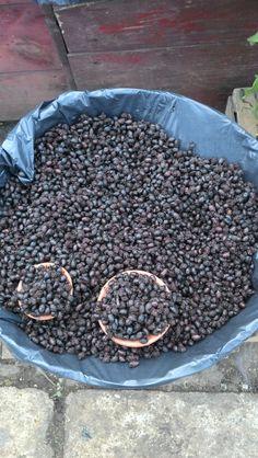 Vendiendo hormigas chicalotas en el mercado de San Cristóbal de las casas