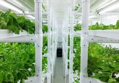 Cropbox pop-up shipping container farms allow you to have a farm anywhere | Inhabitat - Green Design, Innovation, Architecture, Green Building