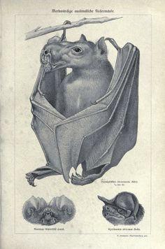 Tierleben : - Biodiversity Heritage Library