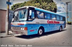 bus da cat rose