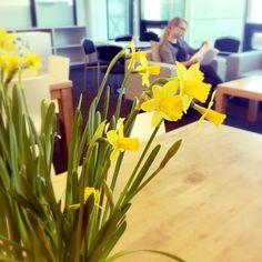 Kevät on saapunut myös MPS:n toimistolle!