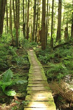 Walking the Wildside - a trail used by the Ahousaht people for 1000's of years. Flores Island. In the heart of Clayoquot Sound on Vancouver Island in beautiful British Columbia Canada.