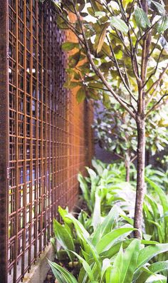 Rusted Reo Screen Offset multilayers to obscure Trellis Fence, Garden Trellis, Garden Fencing, Garden Screening, Plant Screening, Steel Fence, Most Beautiful Gardens, Fence Design, Design Design