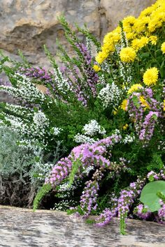 Dom pod brzozą: Jesienny ogród w domu pod brzozą
