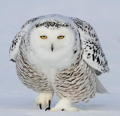 <3 Just look at that intense stare <3   *The cold look! by David Hemmings*