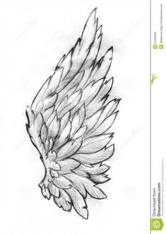 16 ideas bird wings drawing angels for 2019 Art Drawings Sketches, Cool Drawings, Tattoo Drawings, Hand Drawings, Angel Wings Drawing, Feather Tattoos, Dreamcatcher Tattoos, Angel Wing Tattoos, Dove Tattoos
