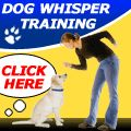 GREAT website full of info on taking care of and training puppies