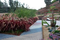 landscaping-with-xeriscape-plants.jpg