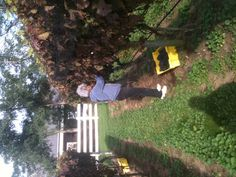 Volunteer Helping with Cabernet Franc Harvest at Truro Vineyards