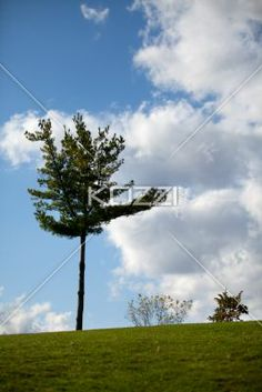 tree against cloudy sky. - View of a tree against cloudy sky.