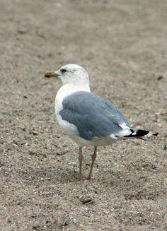 Sea-bird-1353595517_55.jpg (1200×1667)