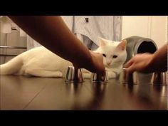 This cat is smarter than I am... Shell Game Cat | The 30 Most Important Cats Of 2013