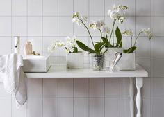 Orkideer er lekkert på badet. Du får en følelse av spa og velvære.