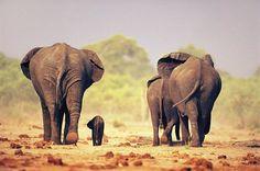 Terribile incidente in India, nello Stato occidentale del West Bengala, dove un convoglio che, stando ai primi rilevamenti,http://tuttacronaca.wordpress.com/2013/11/14/incidente-in-india-treno-investe-e-uccide-sei-elefanti/