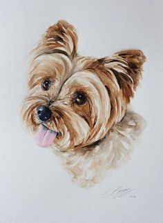 Yorkshire terriers are a little type of & dogs& weighing a meager seven pounds as. The post Yorkshire terriers are a little type of & dogs& weighing a meager seven pound& appeared first on SH Dogs. Watercolor Paintings Of Animals, Watercolor Portraits, Animal Paintings, Animal Drawings, Watercolor Art, Art Drawings, Indian Paintings, Watercolor Landscape, Abstract Paintings