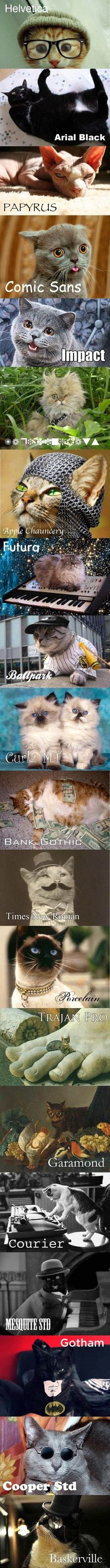 Cats and fonts