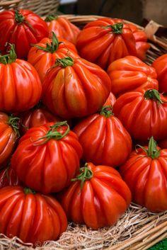 Maravilhosos tomates. Presentes da Terra.
