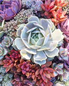 """3,986 Likes, 10 Comments - We Ship Succulents (@fairyblooms) on Instagram: """"time to RELAX and unwind : @atlasblume"""""""