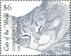 Domestic Cat (Felis silvestris catus)
