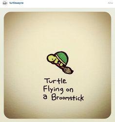 Kikis turtle