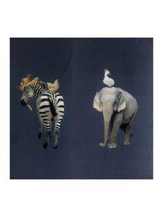 Bomuldsjersey - rapport med zebra bagdel !